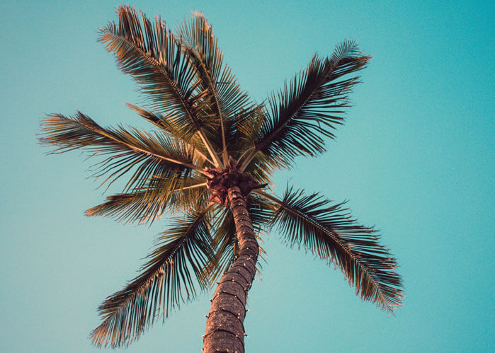 An image of a palm tree that represents the location of the South Florida law firm, ASR Law Firm.
